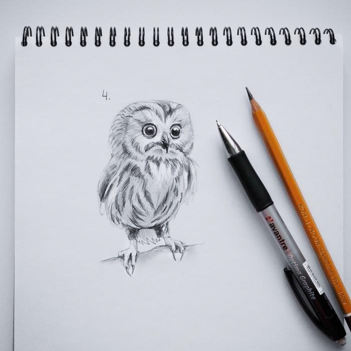 Как нарисовать сову. Уроки рисования, Сова, Арт, Учусь рисовать, Пошаговые инструкции, Птицы, Длиннопост, Туториал, Рисунок