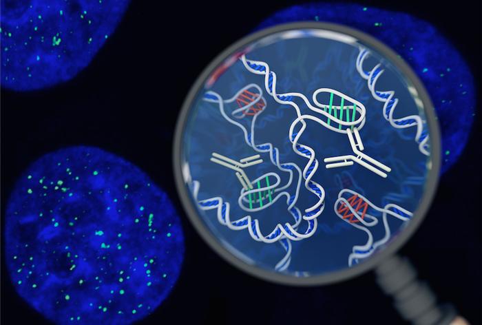Подтверждено наличие новой структуры ДНК в человеческих клетках Наука, ДНК, Структура, Открытие