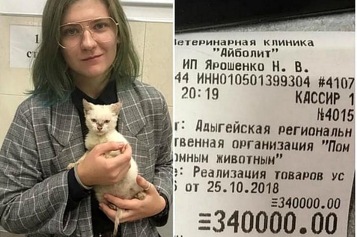 «Комсомолка» разыскала девушку, отдавшую 340 тысяч приюту для животных. Эти деньги она копила на машину Адыгея, Майкоп, Приют, Кот, Благотворительность, Длиннопост