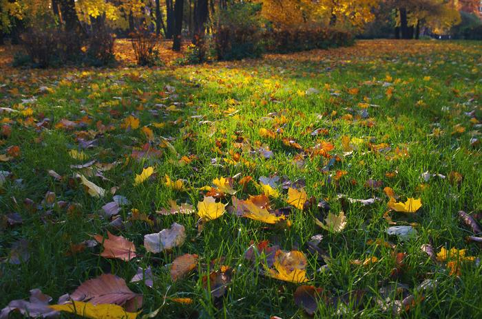 Золото на Елагином острове - 2. Фотография, Осень, Санкт-Петербург, Елагин остров, Пейзаж, Солнечно, Pentax, Длиннопост