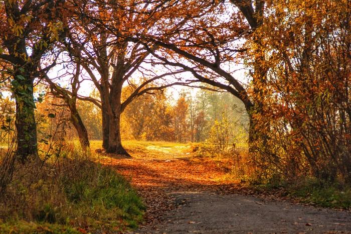 Дубовый лес в осеннем наряде Лес, Осень, Начинающий фотограф, Свет, Фотография, Длиннопост