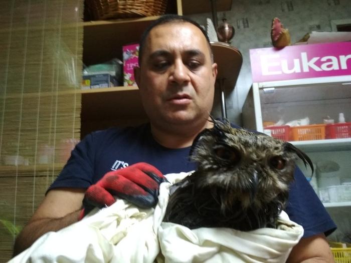 Как спасали филина, которого мужик держал в шкафу и пытался продать на Авито Животные, Сова, Челябинск, Длиннопост