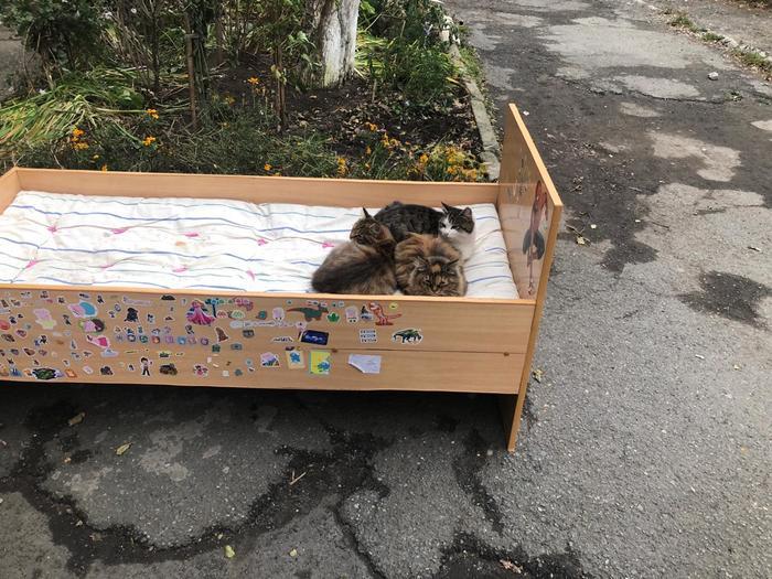 Владивосток. Утро. 8 ноября. Котики греют кровать Кот, Милота, Лапки, Утро, Владивосток, Доброе утро