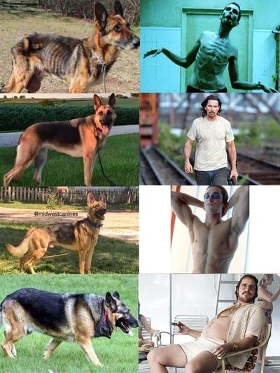 Как определить, какой Кристиан Бейл твоя собака Собака, Кристиан Бейл, Вес, Комментарии