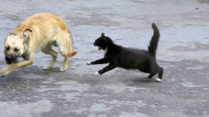 Дворовый котохулиган. Кот, Собака, Догонялки