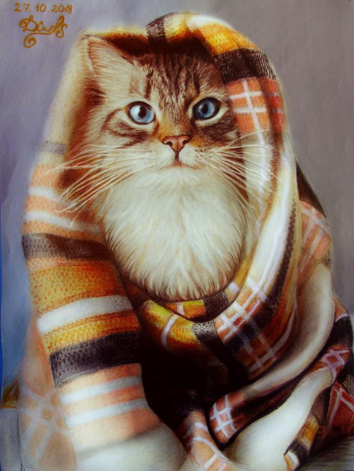 Коту нипочем холода, внутри кота теплота :)