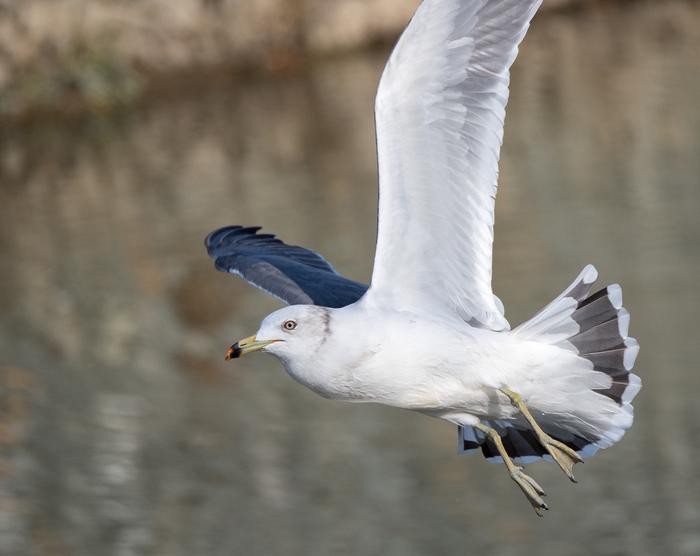 Городские птицы Сорока, Воробей, Ворона, Чайки, Утка, Находка, Длиннопост