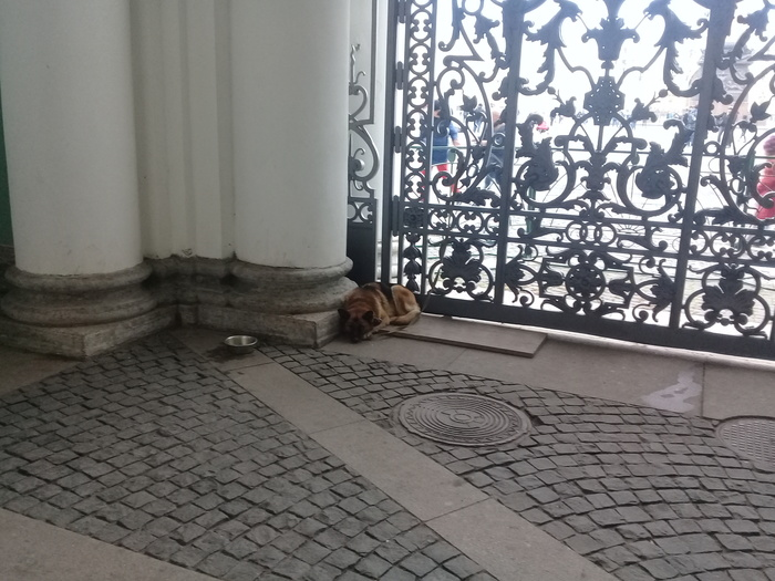 Сторож Эрмитажа Санкт-Петербург, Эрмитаж, Собака, Грусть, Охраняет, Длиннопост