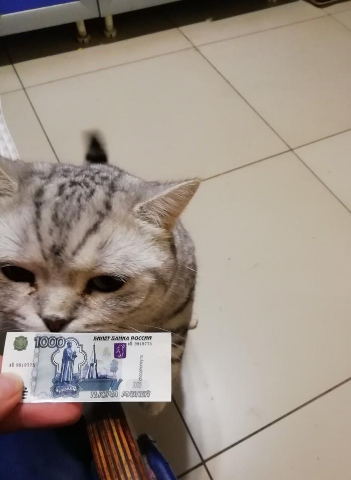Не очень сговорчивый кот Кот, Деньги, Мытье, Длиннопост