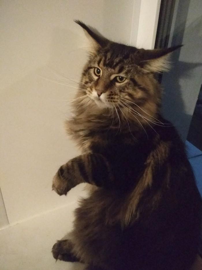 Про котиков... Кот, Мэйкун, Котомафия