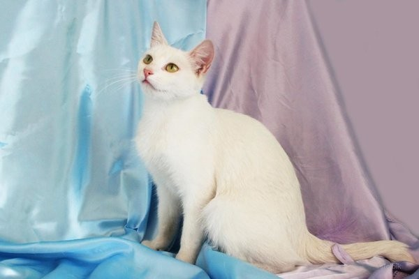 Красивые животные-альбиносы Фотография, Картинки, Животные, Альбиносы, Длиннопост, Кот