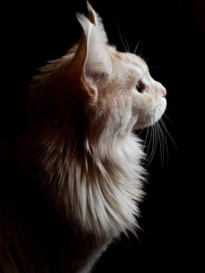 Моя львица-царица