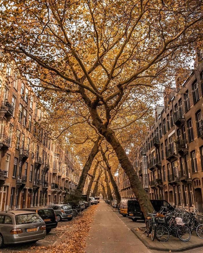 Улочка в Амстердаме