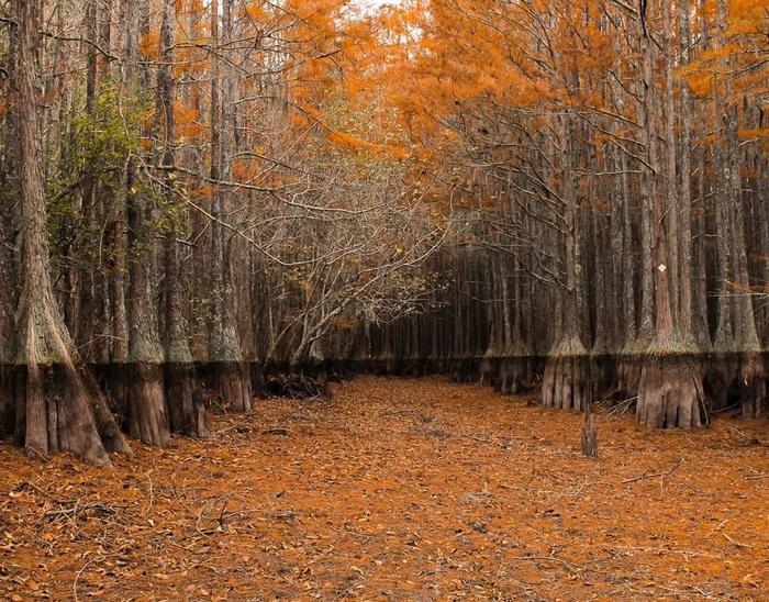 Деревья в высушенном болоте