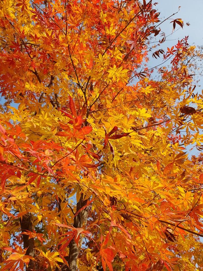 Осень в Кванджу