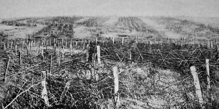 Война, которую не ждали: 8 «школьных» заблуждений о Первой мировой Длиннопост, История, Война, Оружие, Первая мировая война