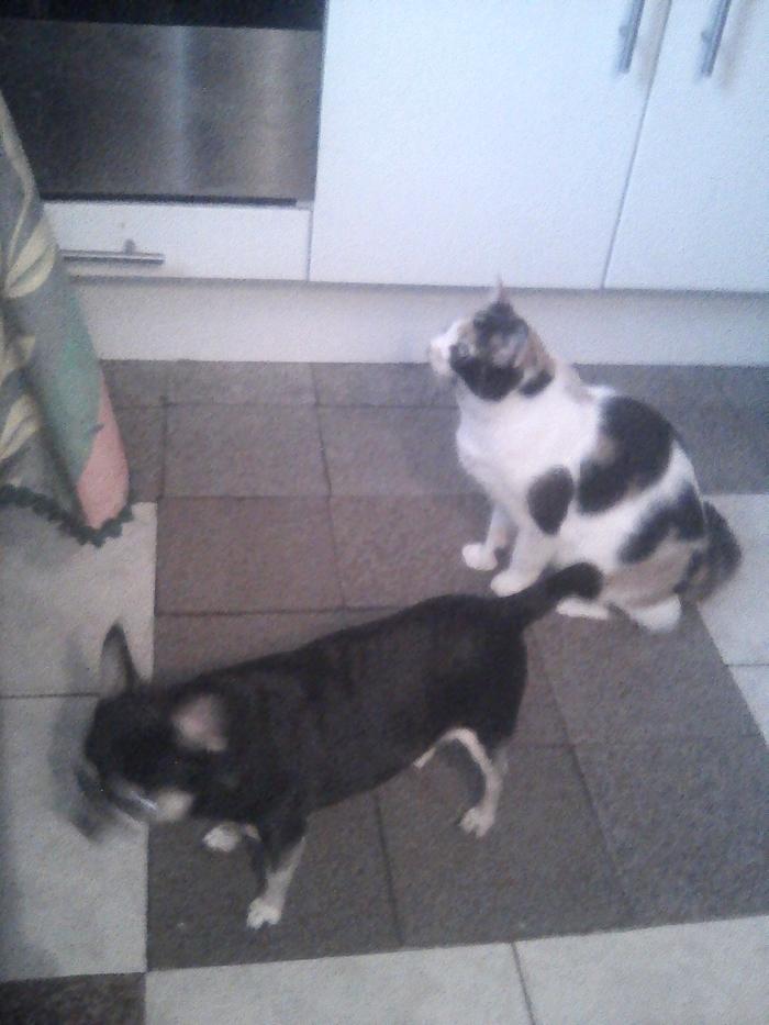 Мои зверята..)) Кот, Котомафия, Коты и собаки вместе, Длиннопост