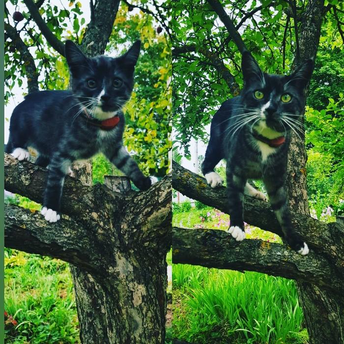 До и после Кот, До и после