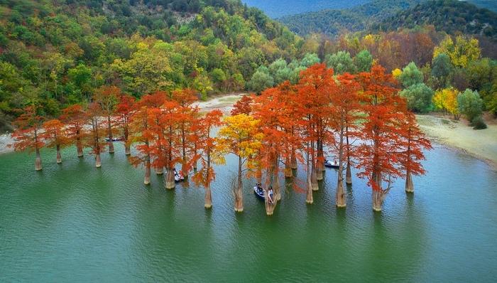 Осенняя красота! Осень, Красота, Пейзаж, Природа, Краски, Фотография, Сукко, Болотные кипарисы