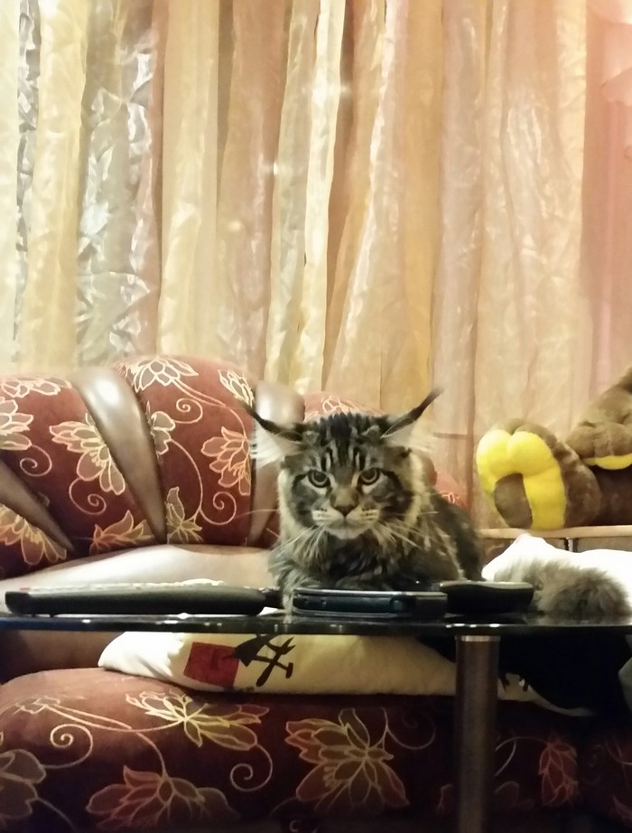 Не думаю, что он настроен на игру))) Мейн-Кун