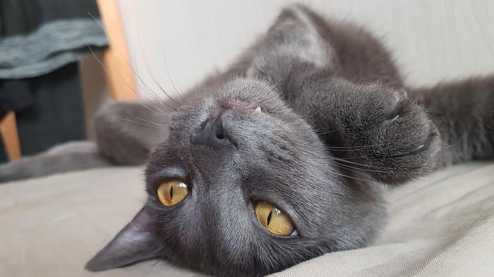 Утренние кошачьи потягушки Кот, Котята, Котомафия, Длиннопост