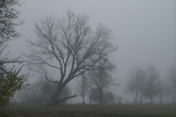 Тишина Начинающий фотограф, Пейзаж, Природа, Осень, Туман, Дерево, Canon, Canon 1200d