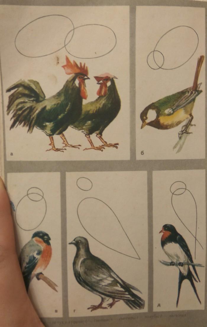 Рисуем сову Рисуем сову, Птицы, Просто