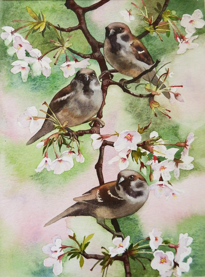 Весна Акварель, Триптих, Воробей, Яблоня, Птицы, Цветы, Рисунок, Длиннопост