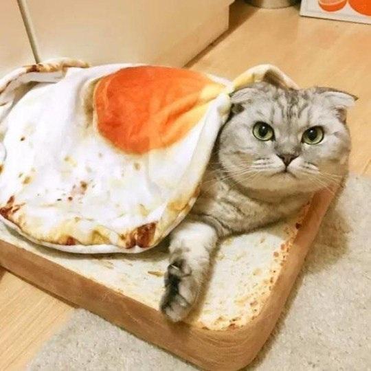 Забавная кошачья постель