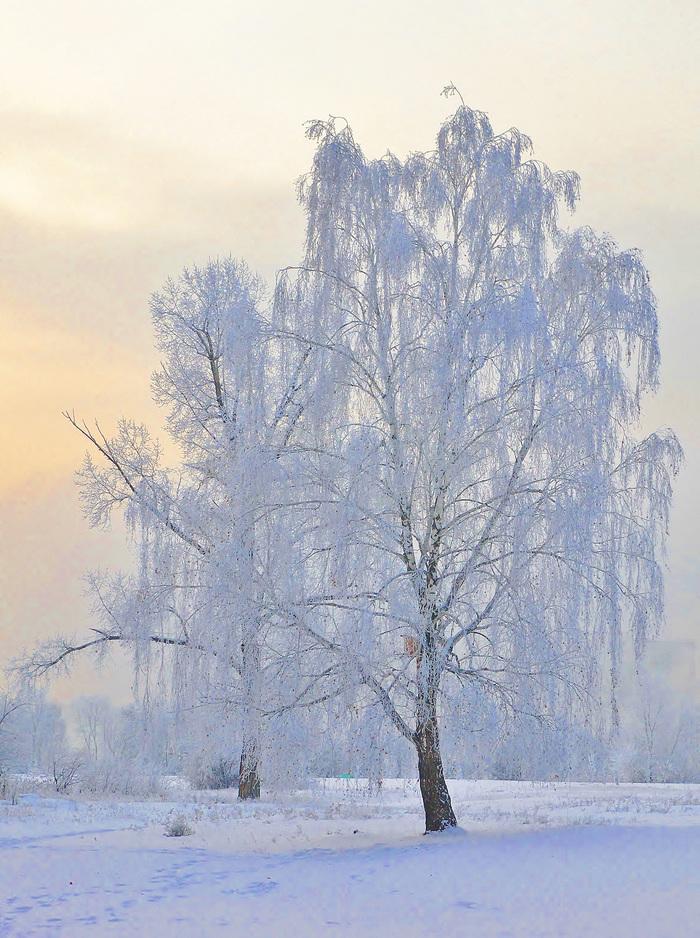 Белая берёза Фотография, Зима, Березы, Красота природы, Россия