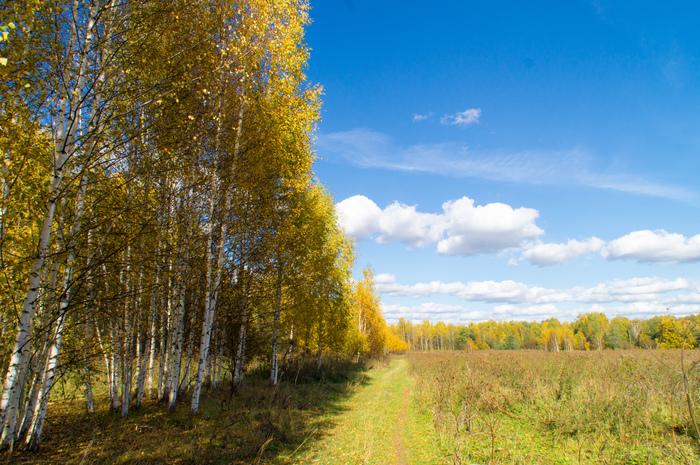Уходящей осени. Осень, Осенние листья, Длиннопост