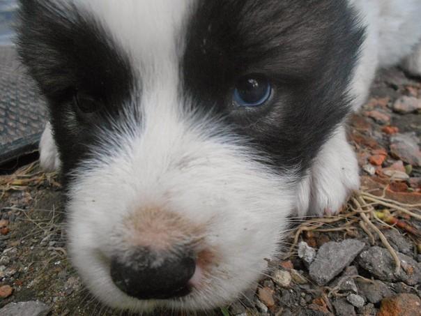 Щенок вырос, да и собака подросла. Кавказская овчарка, Собака, Любовь, Хронология, Длиннопост