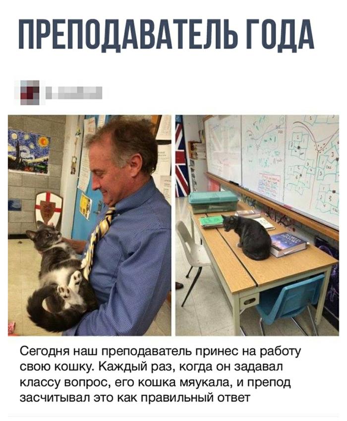 Кошачье образование Кот, Образование, Учитель года, Современный мир, Ирония
