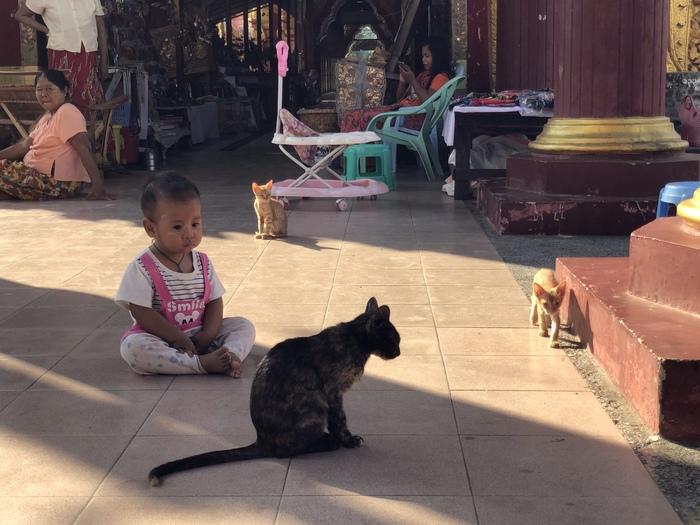Маленький Будда Кот, Котомафия, Дети, Милота, Мьянма, Будда