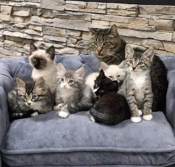 """""""Усатый нянь"""" или как уличный кот стал няней для котят Кот, Няня, Длиннопост, Животные, Питомец"""