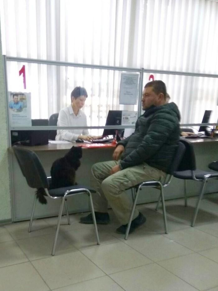 Крымск, мфц Кот, Крымск, МФЦ