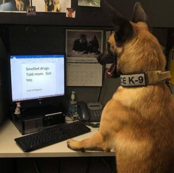 Полицейских собак тоже обязали... Собака, Ищейка, Отчет