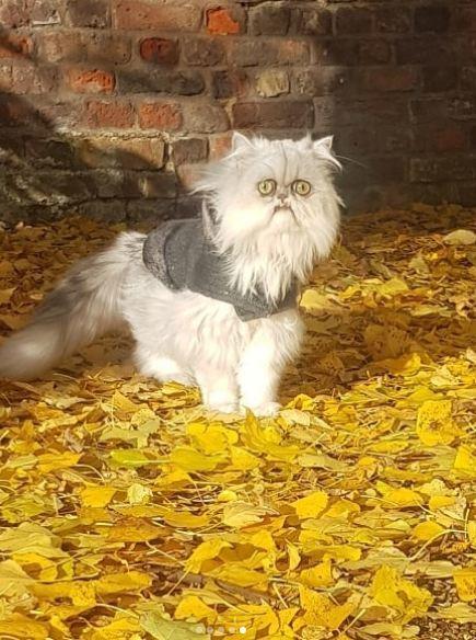 Когда понял что осень почти закончилась Ноябрь, Ужас, Кот, Длиннопост