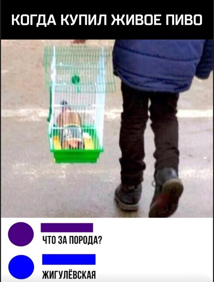 Живое пиво))