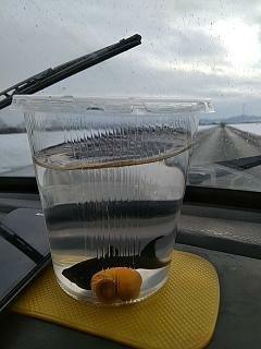 Как я аквариум заводил часть 2 Рак, Аквариум, Рыба, Длиннопост, Первый опыт