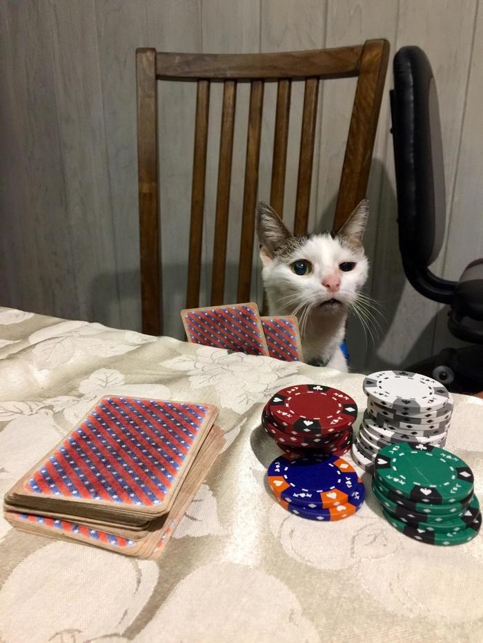 Бывалый игрок