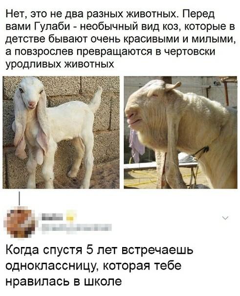 Гулаби Коза, Красота, Скриншот, Комментарии