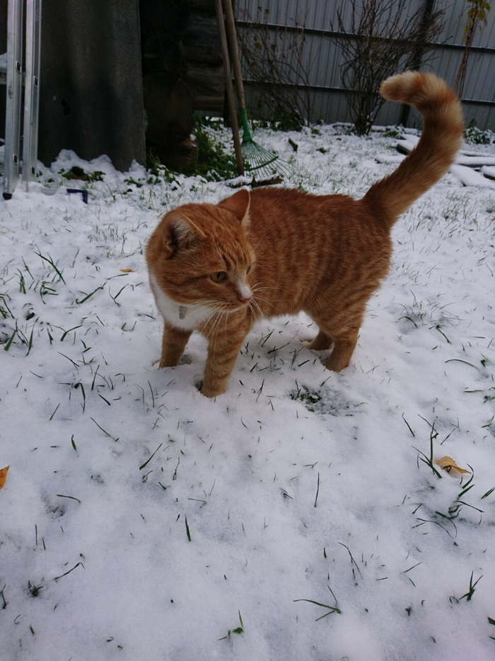 А у нас тоже первый снег Котомафия, Кот, Длиннопост