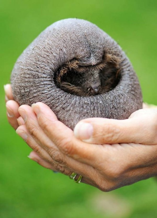 Животные без шерсти едва можно узнать Животные, Шерсть, Длиннопост