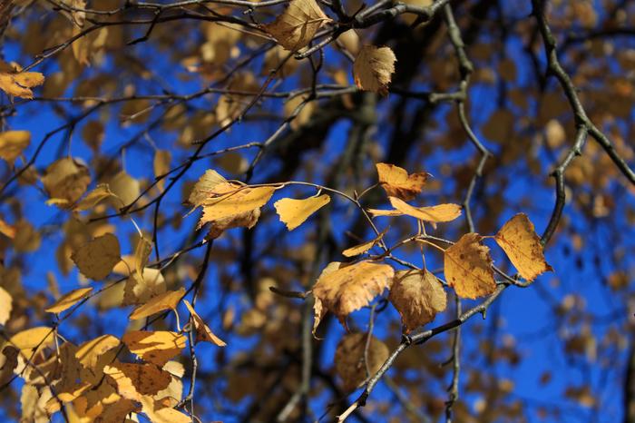 Листики, ёжик и синичка Начинающий фотограф, Осень, Canon, Фотография, Синица, Листва