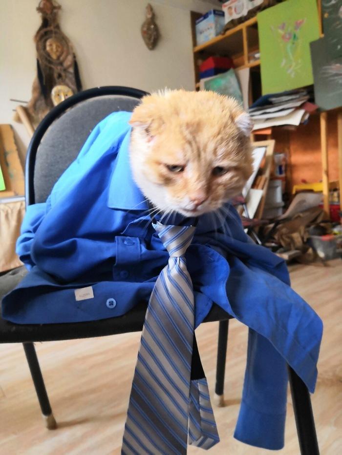 Если бы коты ходили на работу