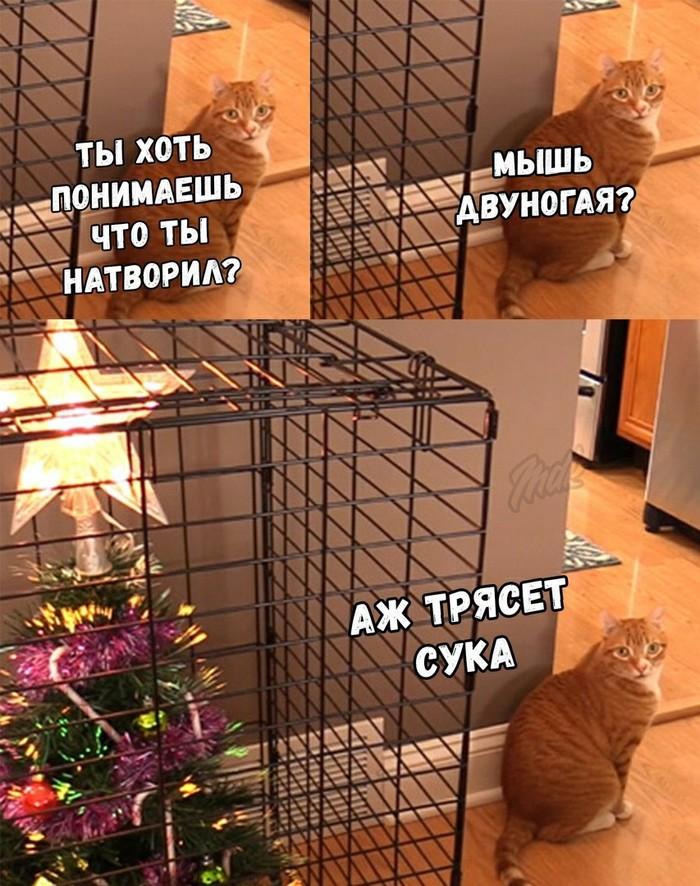 С новым годом пушистый !)