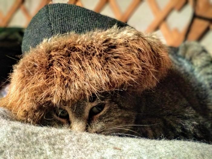Мастер маскировки Кот, Спрятался