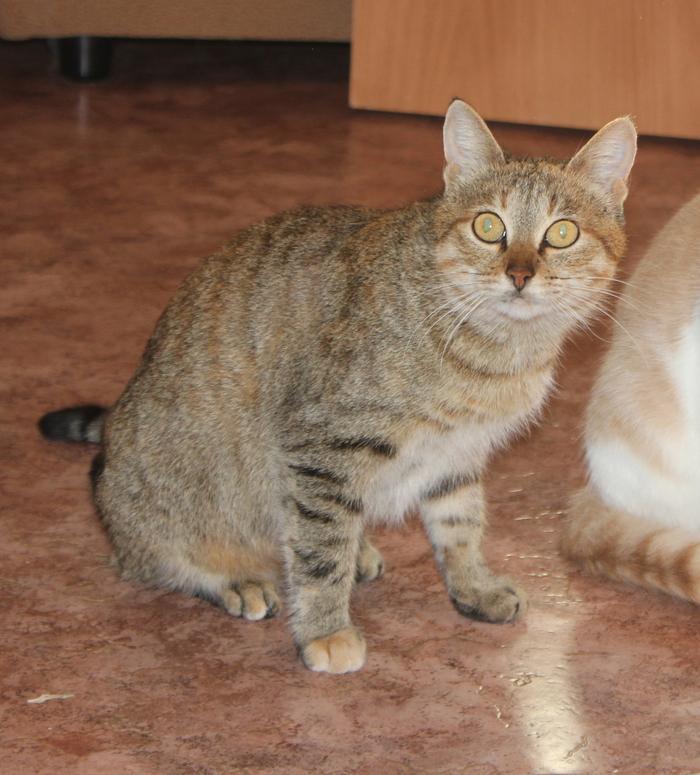 Кошечка в добрые руки (г.Пенза) Кот, В новый дом, В добрые руки, Пенза, Длиннопост, Без рейтинга