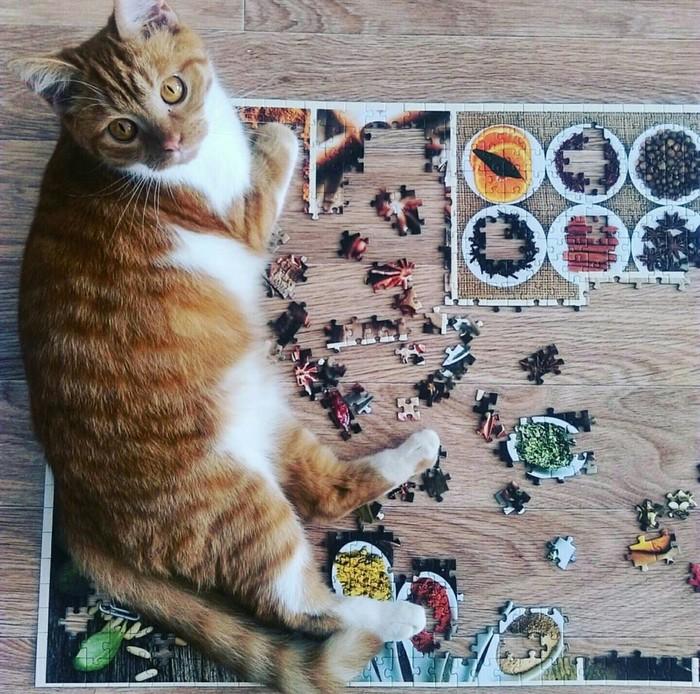 Пропал кот Кот, Потерялся кот, Москва, Без рейтинга